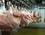 افتراضي تصدير اللحوم الحلال من رومانیا