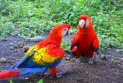 Affectionate Macaw Parrots Looking For Good Homes