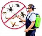 شركة مكافحة حشرات فى دبى 0566511084 الفردوس