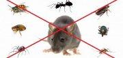 افضل شركة مكافحة الفئران بعجمان | 0567540424 التميز